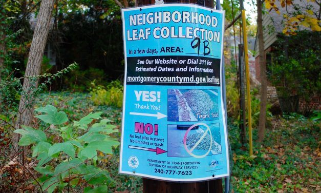 Leaf collections to begin next week