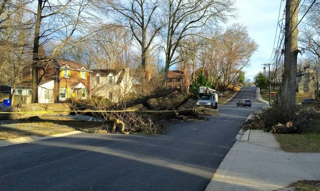 County looking for storm damage information, warns of likely scams