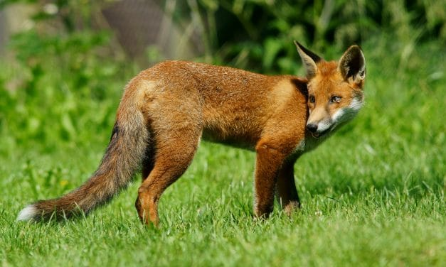 Local Wildlife Can Be Cute, But Potentially Dangerous