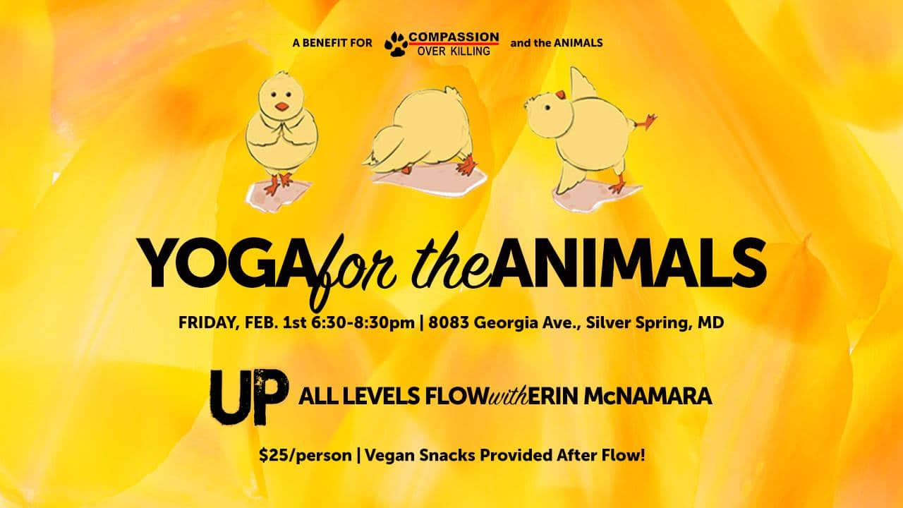 Yoga for the Animals