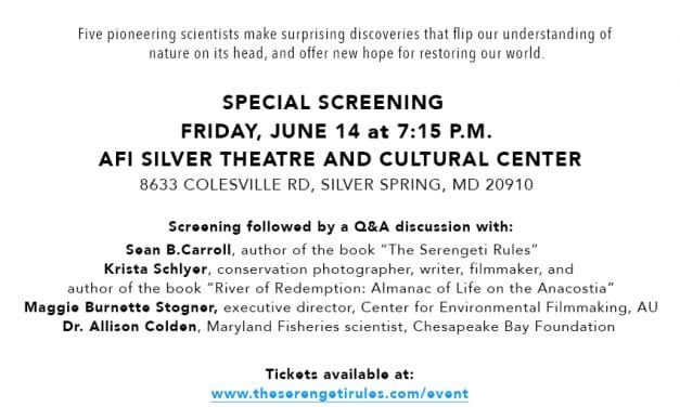 The Serengeti Rules – Film Screening and Panel Discussion
