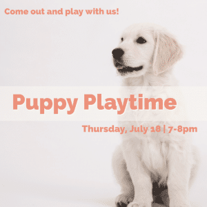 Puppy Playtime at The Big Bad Woof
